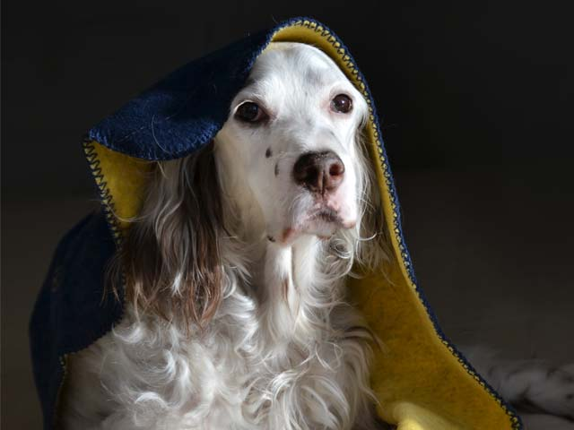 hund-decke-2