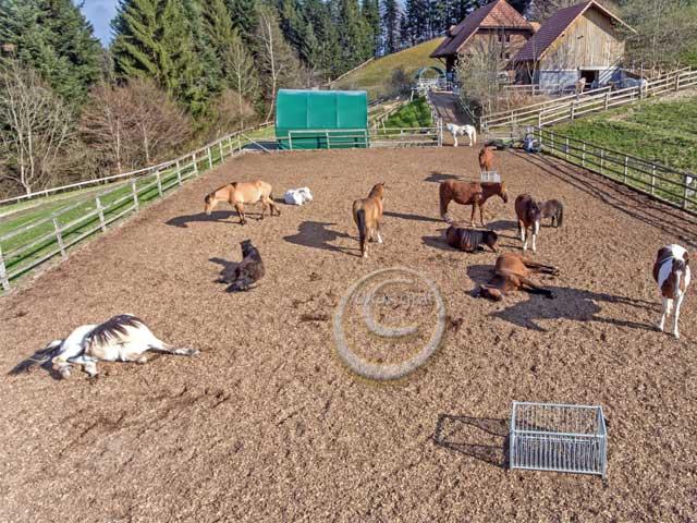 pferde-auslauf-k