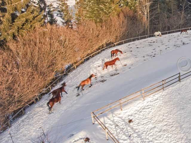 pferde-auslauf-schnee-k