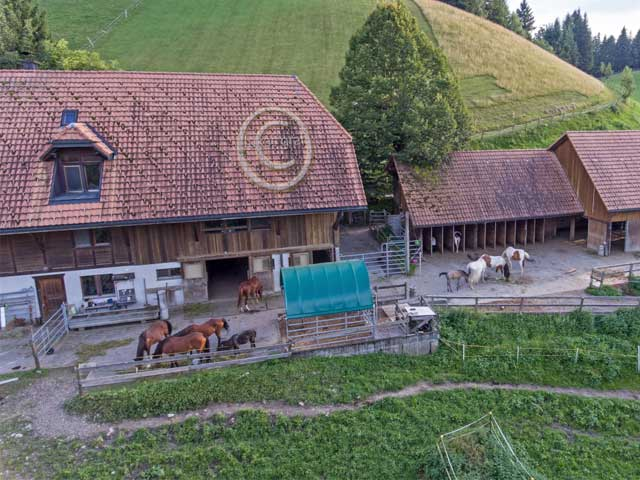 pferde-hof-k